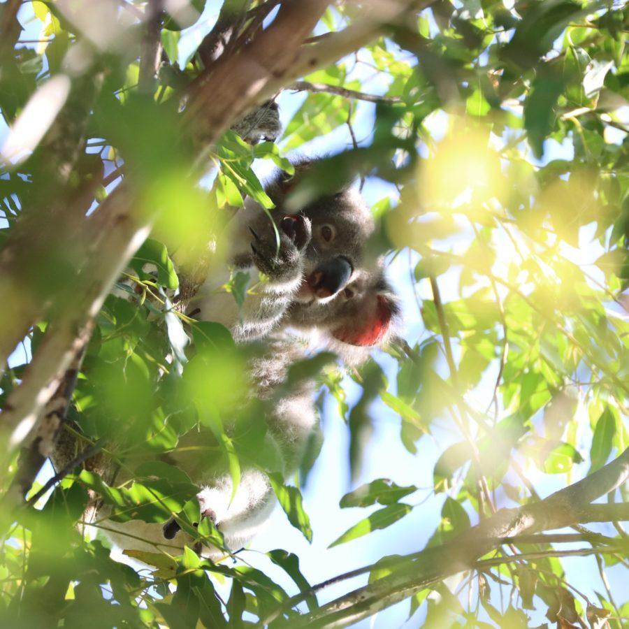Lupita Leaves the Nest