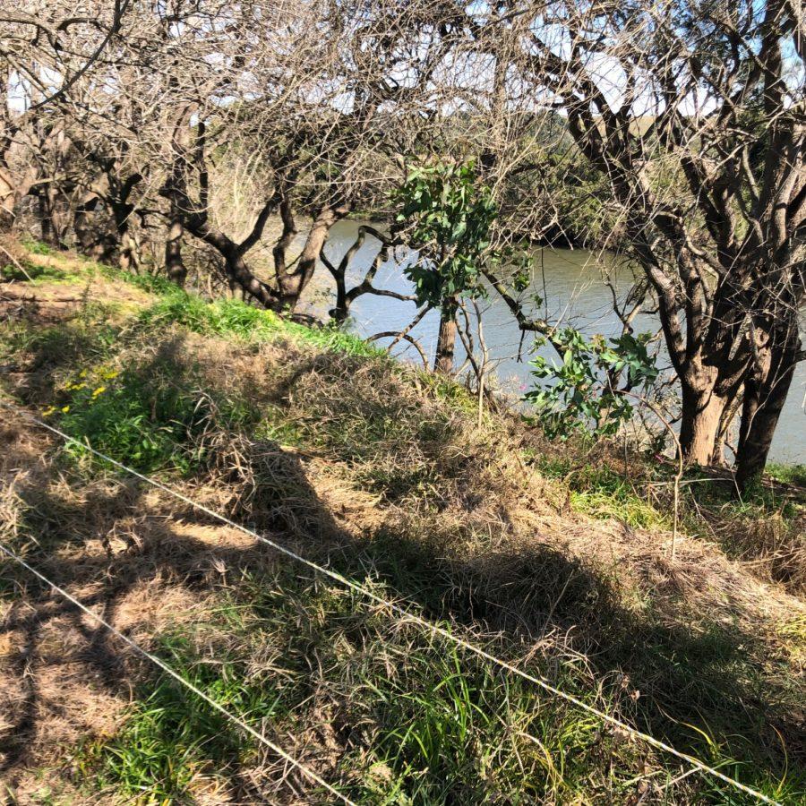 Enhancing koala corridors on Wilson River Floodplain
