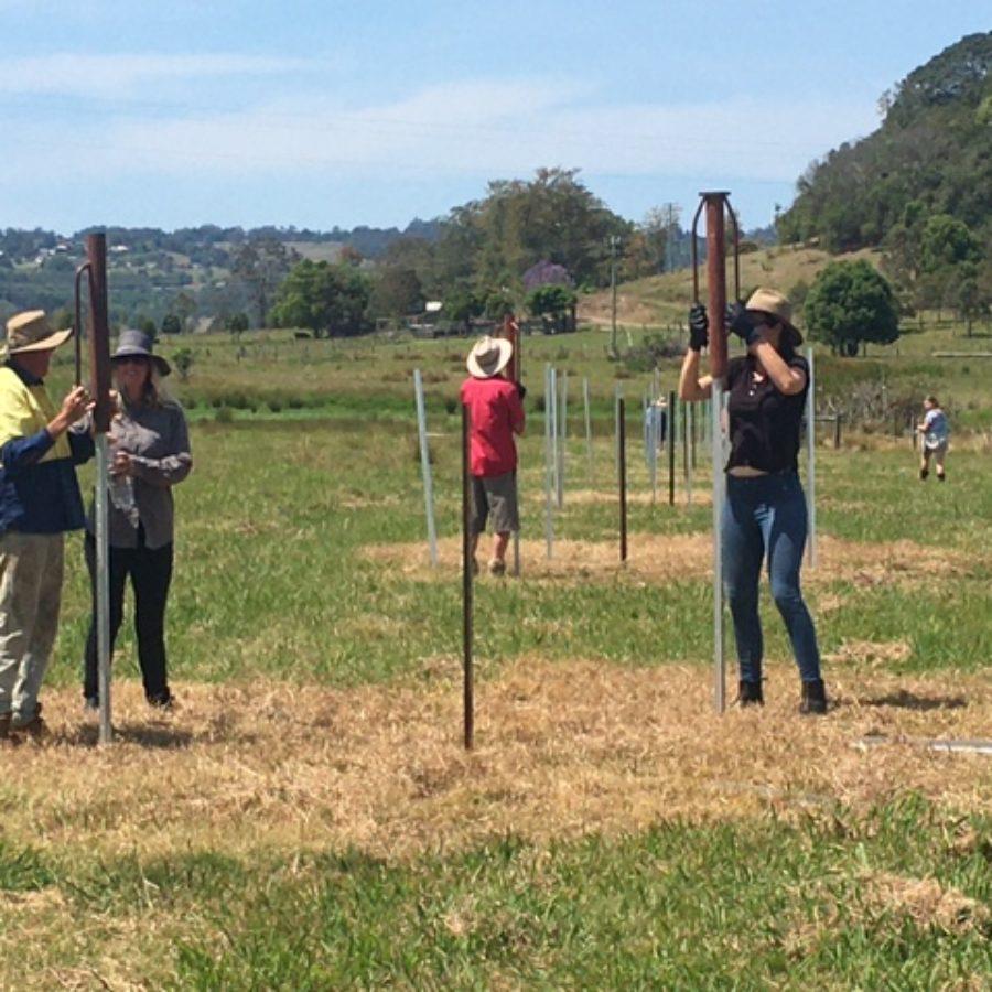 Installing wildlife friendly fencing on 'Koala Island' at Monaltrie