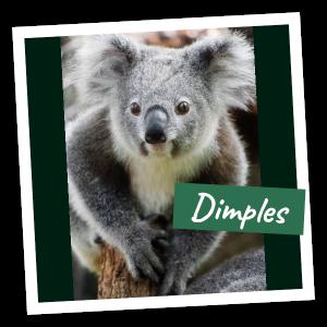 FoK Adopt a Koala - Dimples