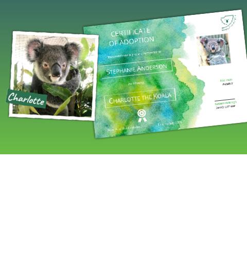 slide - Slider 09 – Adopt a koala