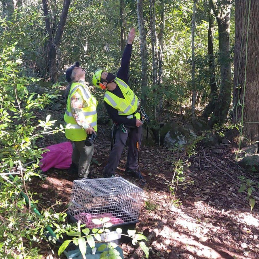 Joint Koala Rescue Mission